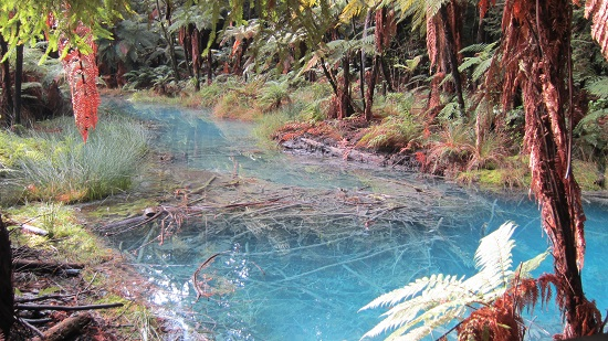Redwood Forest, Rotorua, North Island, New Zealand