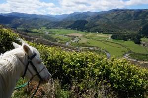 Coastal Views Horse Rides, Wainuiomata, Wellington, New Zealand