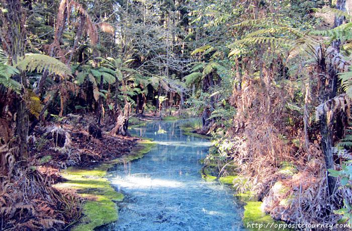 Rotorua, North Island, New Zealand