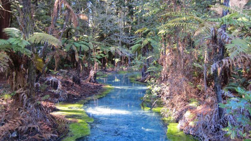 Rotorua red forest - a serene and beautiful place
